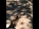 бестрашная кошка Задира