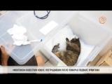 «Фонтанка» навестила кошек, пострадавших после пожара в подвале Эрмитажа