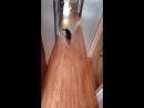 Кошки и лазер