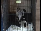 Люци, Мейзи и Трикси ищут дома. 8-900-2107753