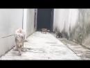 Gato driblante - ninguém pega