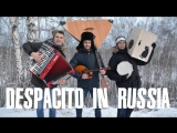 Премьера! DESPACITO IN SIBERIA (ДЕСПАСИТО ПО СИБИРСКИ)