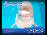 Каникулы. Дельфинарий Набережные Челны