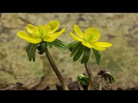 The Beginning - Nikos Ignatiadis (Spring Time)