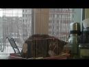 Кошка Масяня и попугай Кеша поменялись местами