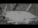 DNR Eagles Minnesota ~ Mom Covered In Snow Incubates Two Eggs 2 22 18