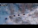 Особенности национального биатлона в Белоруссии прошли гонки на тракторах