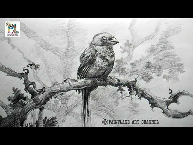 Learn Shading A Bird with Very Easy Pencil Strokes | How to draw A Bird | drawing