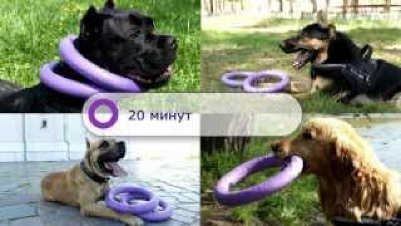 Пуллер Снаряд, который окрыляет собак