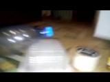 Как поймать мышей с помощью бутылки, упаковок из под фарша,скотча, кошачьего корма и подсолчненого масла 🙌 ДОБАВЬ СЕБЕ НА СТЕНУ Собери конструкцию и избавься от грызунов в своем доме 💪👍