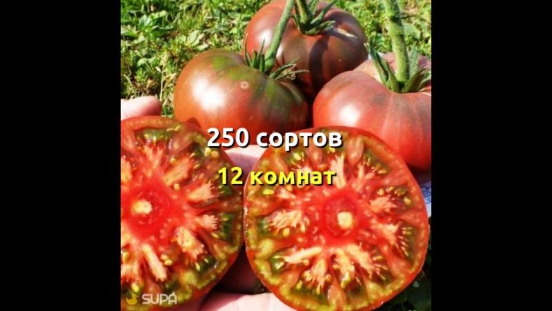 Сегодня Скидка 20% на все семена Помидома!