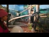 Мы в зоопарке Новосибирска