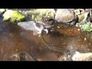 Подлёдная рыбалка Кот рыболов