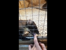 Зоопарк Лесная братва