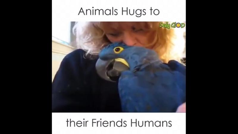 Любовь к животным - бесценный дар!