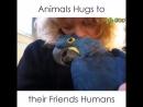 Любовь к животным бесценный дар