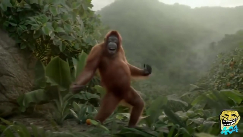 Животные танцуют под музыку Funny animals dancing in music