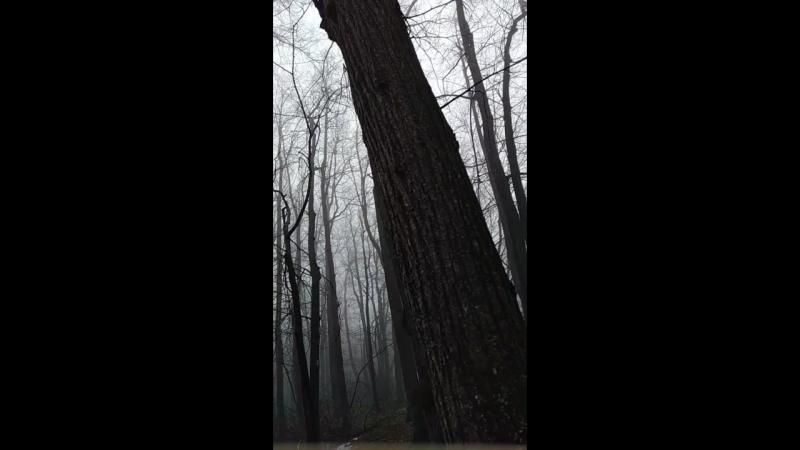 утро туманное и пение птиц).mp4