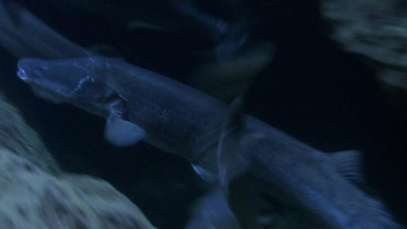 BBC: Планета Земля (Серия 3. Пресная вода)