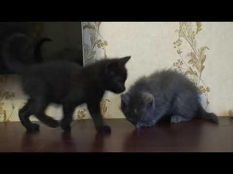 Офа и Миша 2