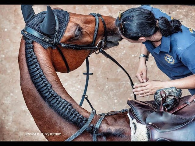 ~ Конный спорт ~ Zoom ~ Equestrian sport ~