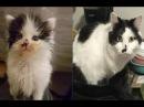 Смешные кошки до слёз Видео приколы Смешные коты до истерики 2018 6 Котики и кошечки Без монтажа
