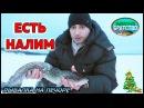 ЛОВЛЯ НАЛИМА ЗИМОЙ / ЕСТЬ НАЛИМ /ЗИМНЯЯ РЫБАЛКА НА ПЕЧОРЕ / FISHING BURBOT