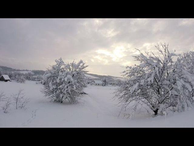 Eugene_foxy_fox video
