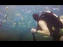 Британский дайвер снял себя в океане мусора на Бали