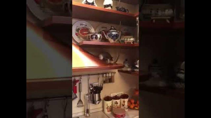 Попугай Жора хулиганит на кухне смешно