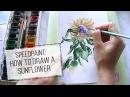 Как нарисовать подсолнух акварелью | Speedpaint: watercolor sunflower. DARJAART