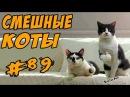 Приколы с котами Видео Коты 2017 Смешные кошки ДО СЛЁЗ Funny Cats Compilation