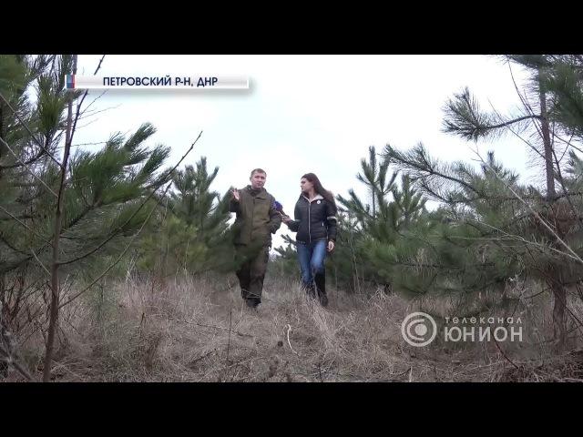 Петровское лесничество четыре года под обстрелом 24 12 2017 Панорама недели смотреть онлайн без регистрации