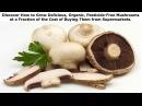 How To Grow Mushrooms, Grow Your Own Mushrooms, Growing Button Mushrooms, Mushroom Species