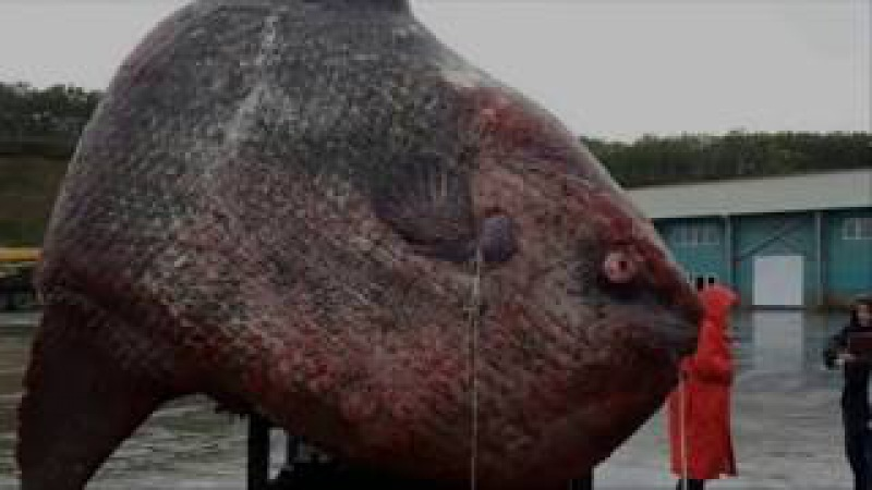 Russian Fishermen Were Out In A Boat On The Pacific When They Hauled In This 1-Ton M...er.