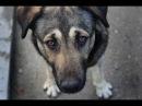 НКН. Стаханов. Бездомные собаки кто виноват и что делать