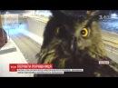 Фінська сова всілася перед камерою спостереження заважаючи відстежувати порушення автомобілістів