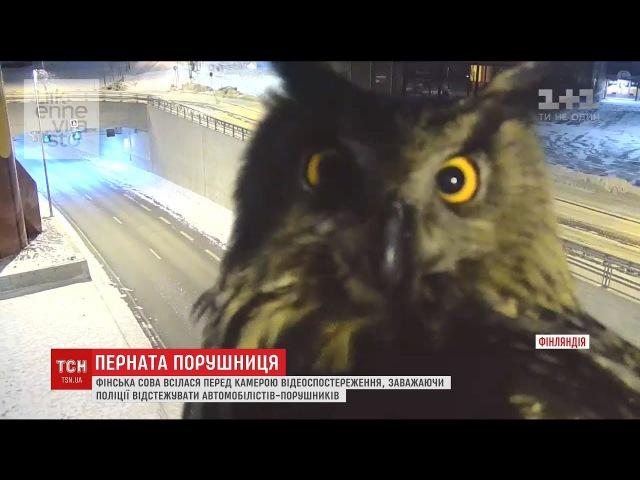 Фінська сова всілася перед камерою спостереження заважаючи відстежувати порушення автомобілістів смотреть онлайн без регистрации