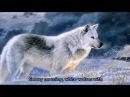 Nastia Poleva White wolves Настя Полева Белые волки