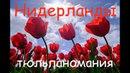 ТЮЛЬПАНОМАНИЯ Голландия нарциссы гиацинты тюльпановые поля Hillegom Netherlands Tulips