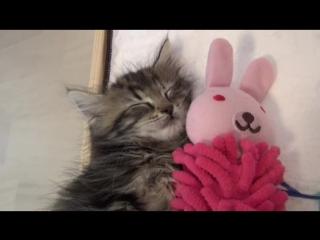 Very cute pisi is sleepin uwu