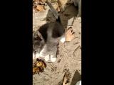 Котята ждут своих хозяев