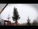 Пересадка ели с окраины в один из дворов Энергетика. Октябрь 2017. Братск