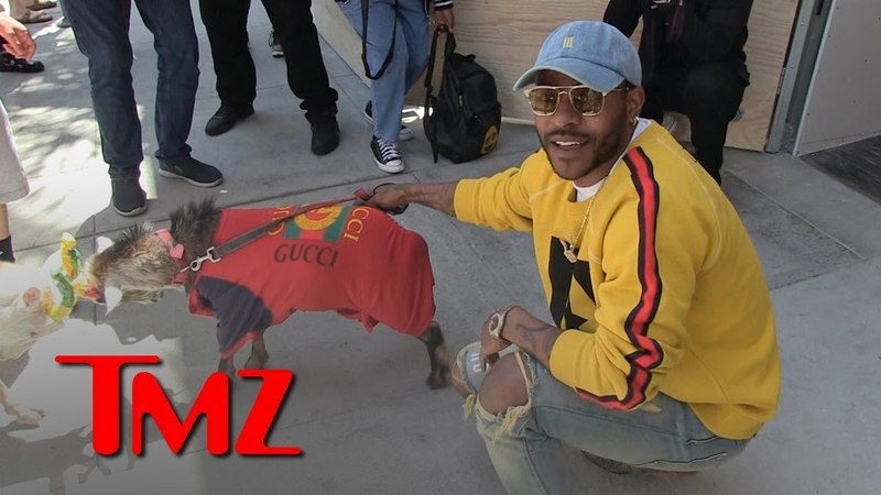 Eric Bellingers Pet Goats Butt Heads While Wearing Gucci | TMZ