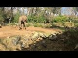 Встреча со слонами и кормёжка морковками