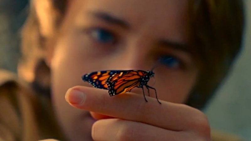 Первый русский трейлер к фильму «Редкая бабочка» » Freewka.com - Смотреть онлайн в хорощем качестве
