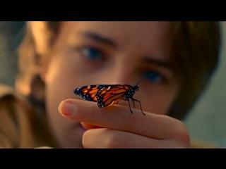 Первый русский трейлер к фильму «Редкая бабочка»