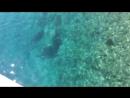 Завтрак на эгейских островах. Чистое голубое море и рыбки
