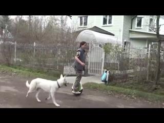 Лайфхаки для владельцев собак 3 - 5 способов упростить жизнь.