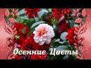 Дарю Тебе Осенние Цветы🌺🌷Музыка Осени🌷🌺Цветы Осени